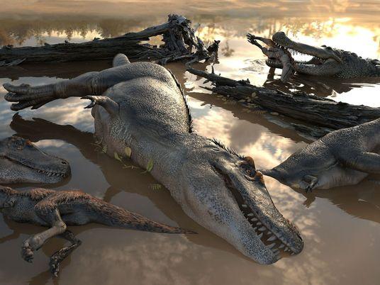 Neue Fossilfunde: Lebten Tyrannosaurier in Gruppen?