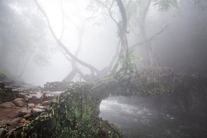 Nebel über Wurzelbrücke