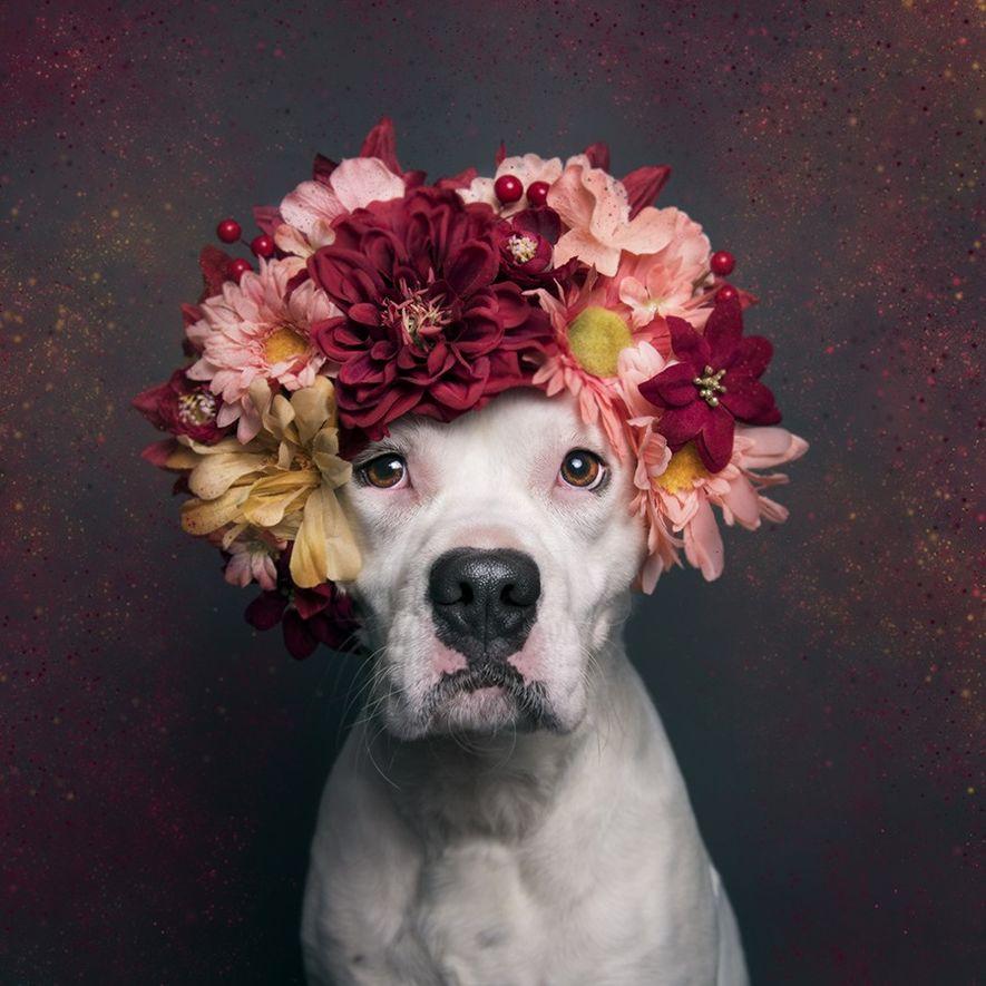 Lizzy, wurde aus dem Almost Home Animal Shelter in Pennsauken, New Jersey, adoptiert.
