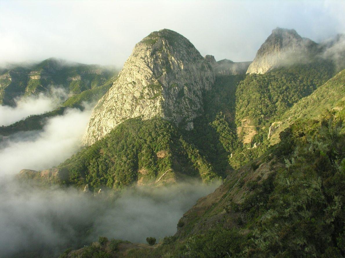Laurisilva ist ein Waldtyp auf den Kanaren, der das ganze Jahr über grün ist und zwischen ...