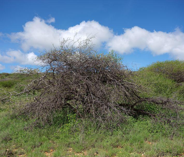 Busch im Norden Kenias