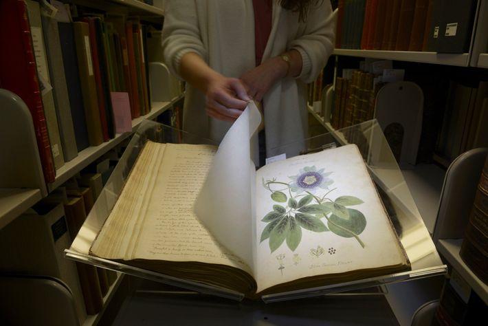 Anne Sauer, die Direktorin der Rare and Manuscript Collections der Cornell University, blättert durch Wollstonecrafts Manuskript.