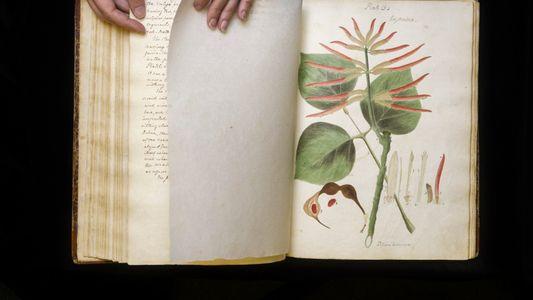 """Verschollenes """"Juwel der botanischen Literatur"""" entdeckt"""