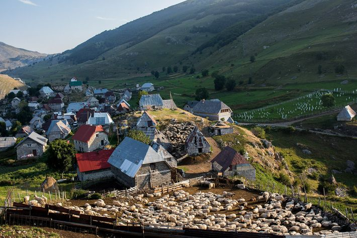 Schafe drängen sich in einem Pferch bei Lukomir auf dem Berg Bjelašnica.
