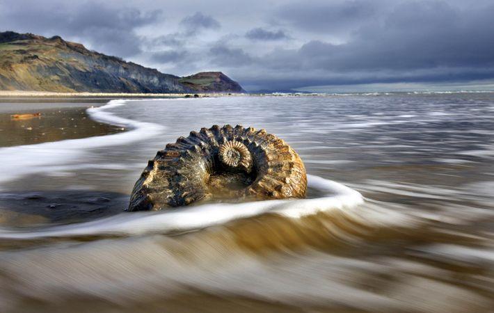Foto eines Muschelfossils am Strand der Jura-Küste bei Lyme Regis, England