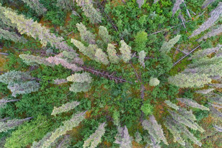Wald Luftansicht