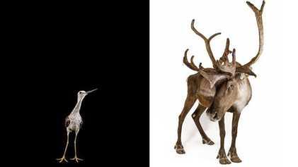 Galerie: Tierarten - Wer kommt durch?