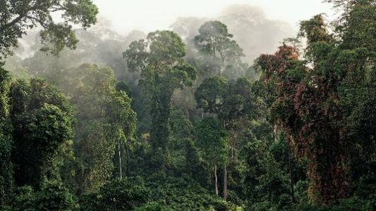 Geheimes Wissen aus dem Regenwald