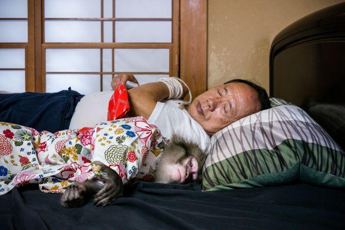 Makake und Trainer schlafen oft in einem Bett