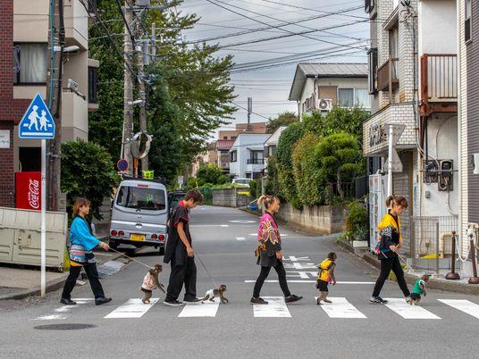 Makaken-Shows: Tierschützer sind gegen Japans Affentheater