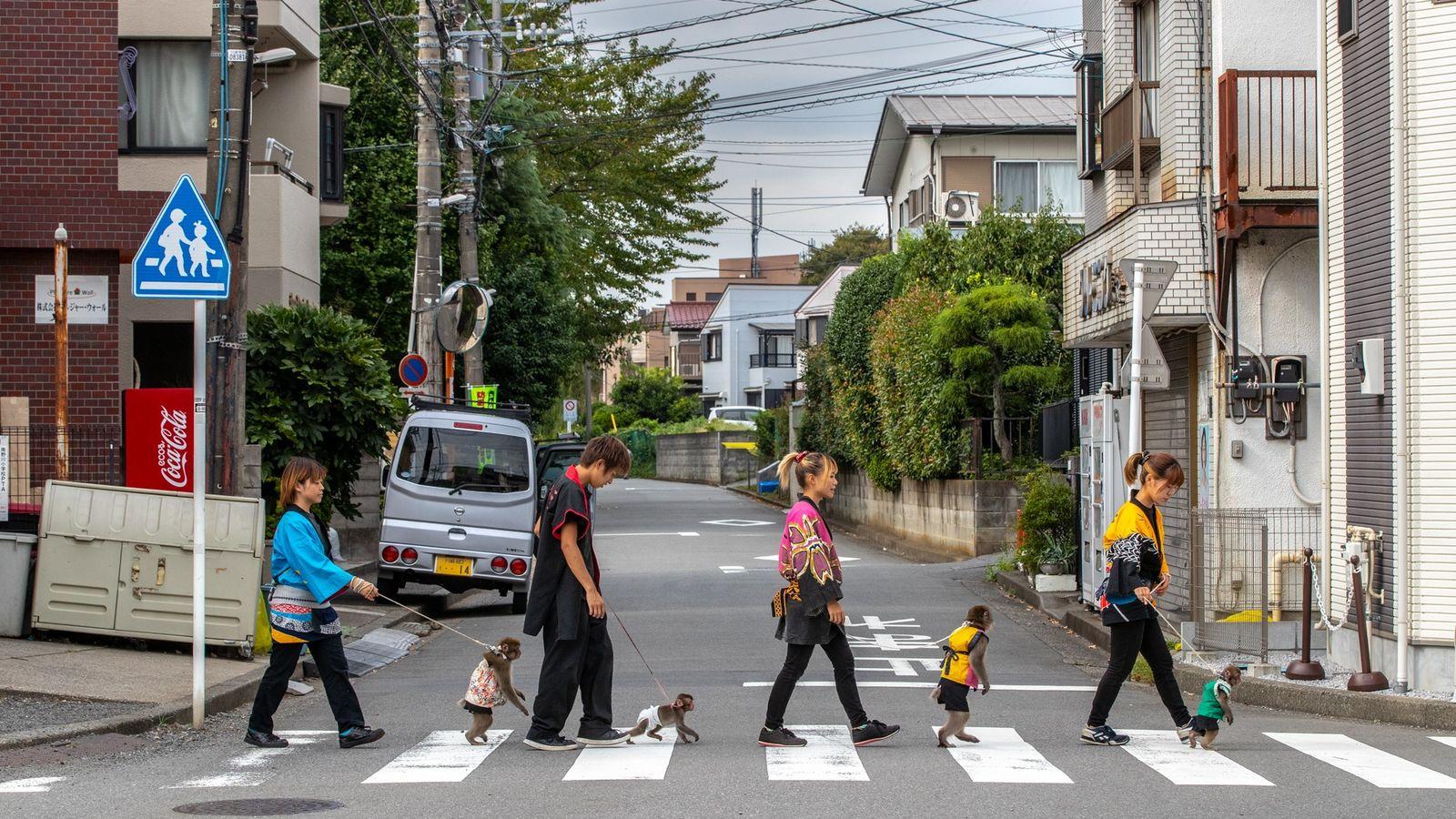 Makaken beim alltäglichen Spaziergang