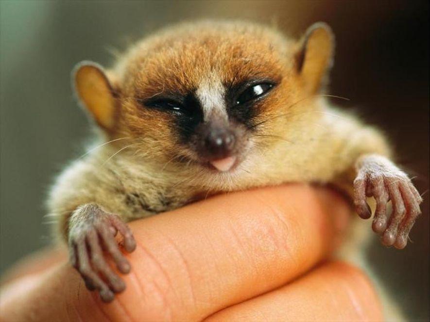6 wirklich winzige Tiere