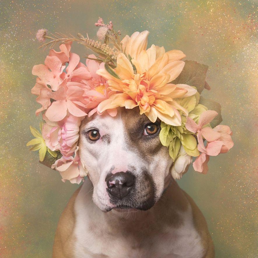 Marina, kann aus dem Town of Hempstead Animal Shelter auf Long Island, New York, adoptiert werden.
