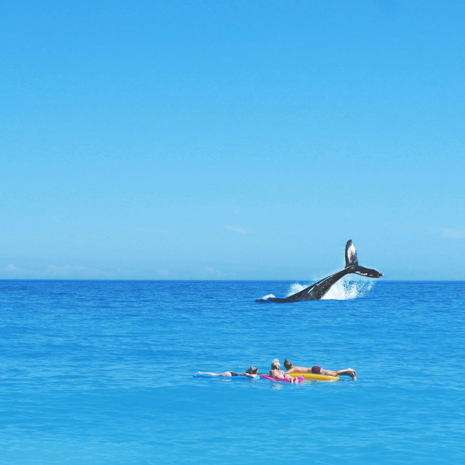 Wert der Wale