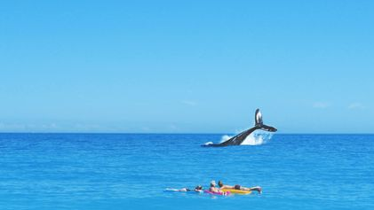Schwimmende Schätze: 5 gute Gründe Wale zu schützen