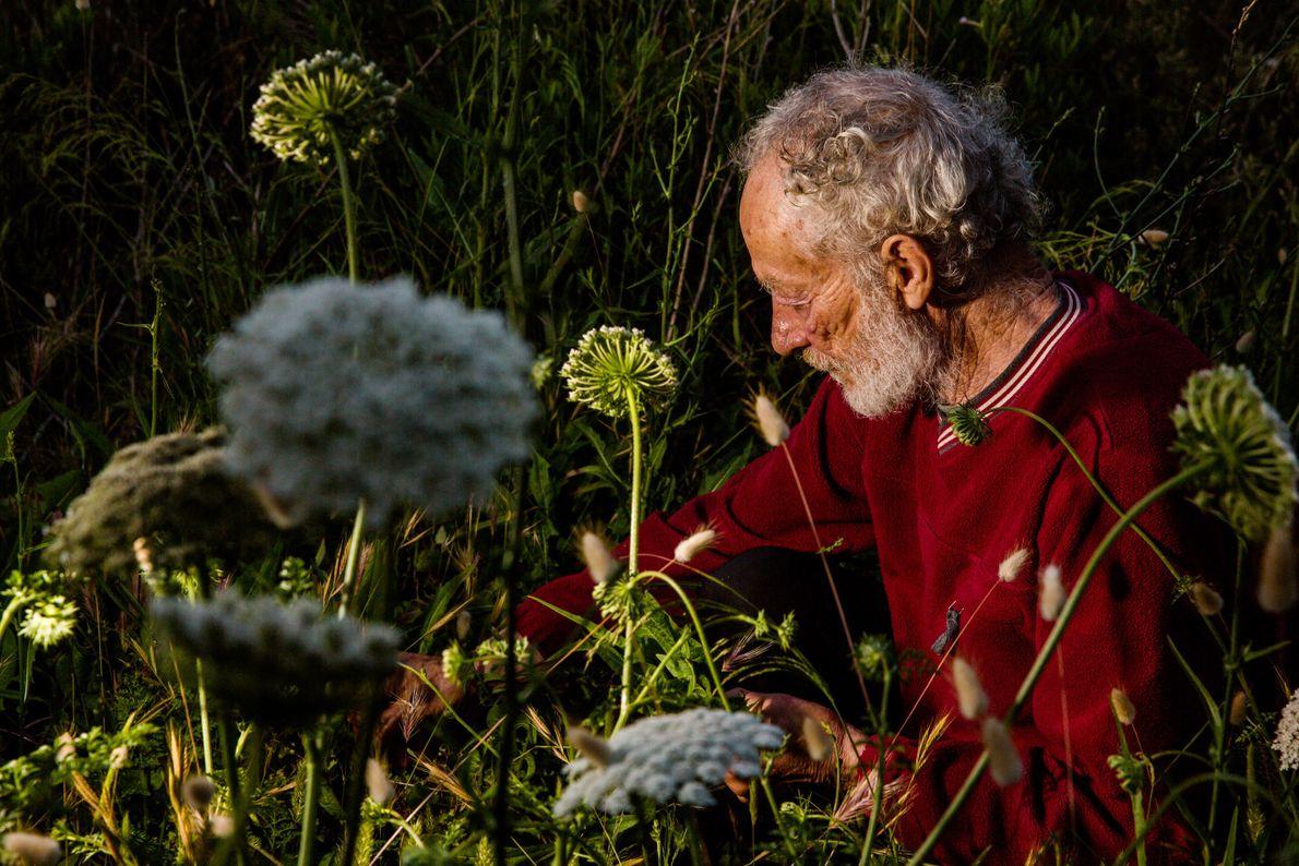 Morandi sammelt Kräuter