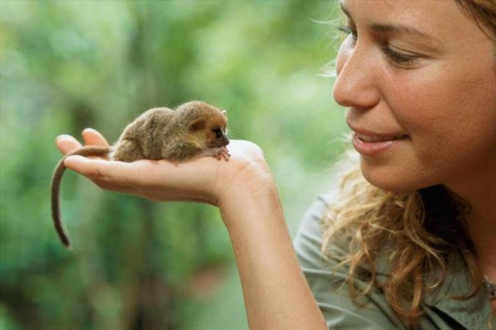 Die Primatologin Mireya Mayor hält auf Madagaskar einen Mausmaki auf ihrer Hand.