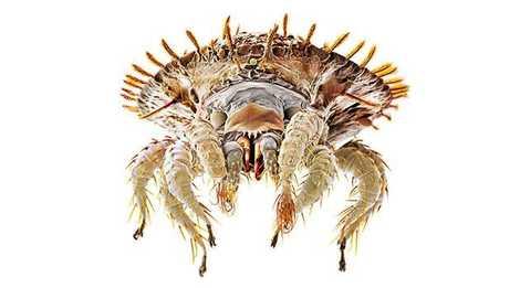 Milben Monster Im Bett National Geographic