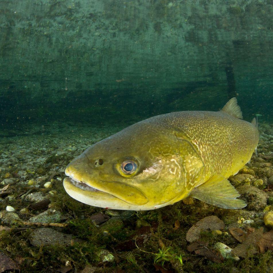 Drogenverseuchte Flüsse: Wenn aus Fischen Crystal Meth-Junkies werden