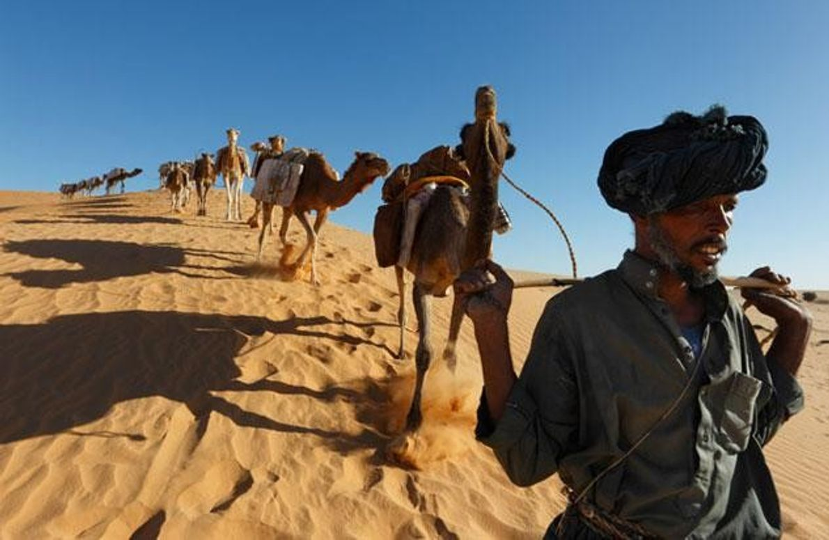 Zu den Ahnen dieses Mannes, der seine Kamele durch die Wüste führt, zählen Tuareg und Araber. …