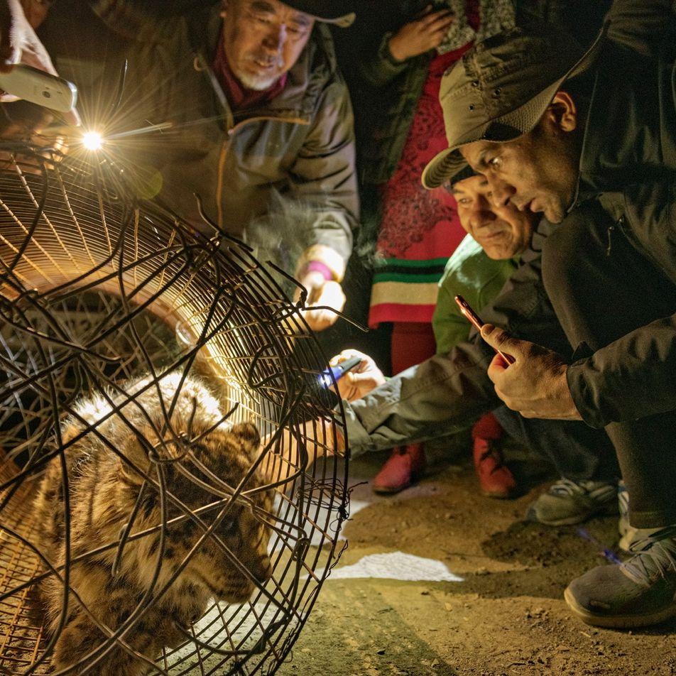 Schneeleoparden im Fokus: Auf der Jagd nach dem Phantom