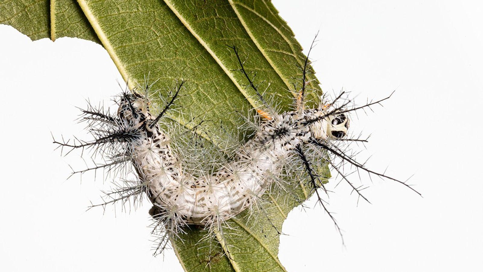 Insekten Aufgaben