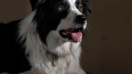 Das Supertalent: Hochbegabung unter Hunden