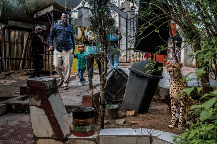 Ein Gepard ist inmitten einer Stadt vor einem Restaurant angebunden