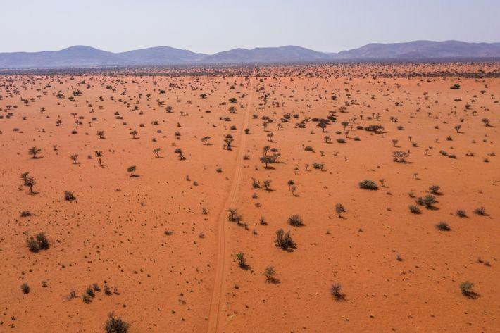 Rötliche Dünen von Tswalu
