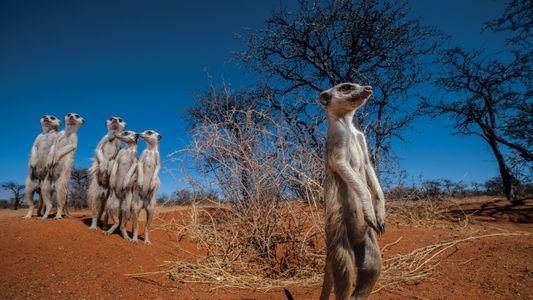 Die Zukunft der Kalahari