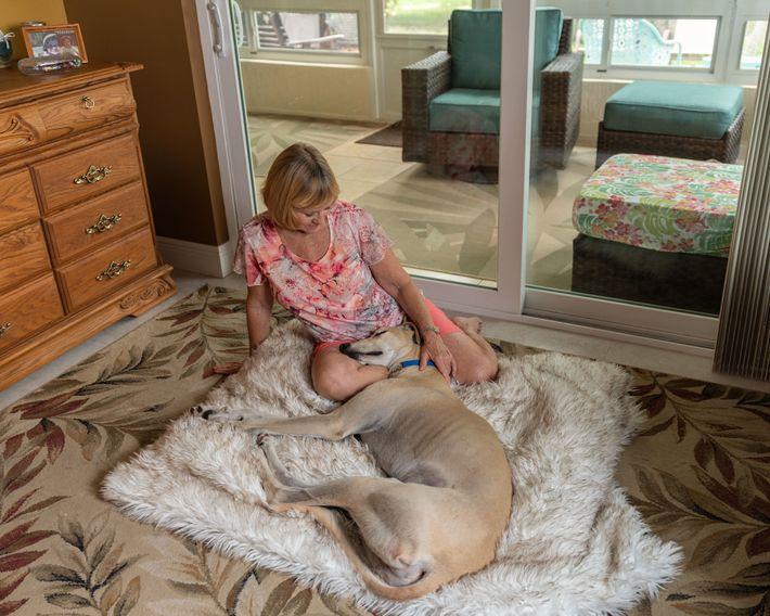 Susan Butchko, die seit 1999 Greyhounds pflegt und adoptiert, streichelt ihren neuesten Vierbeiner, einen pensionierten Rennhund ...