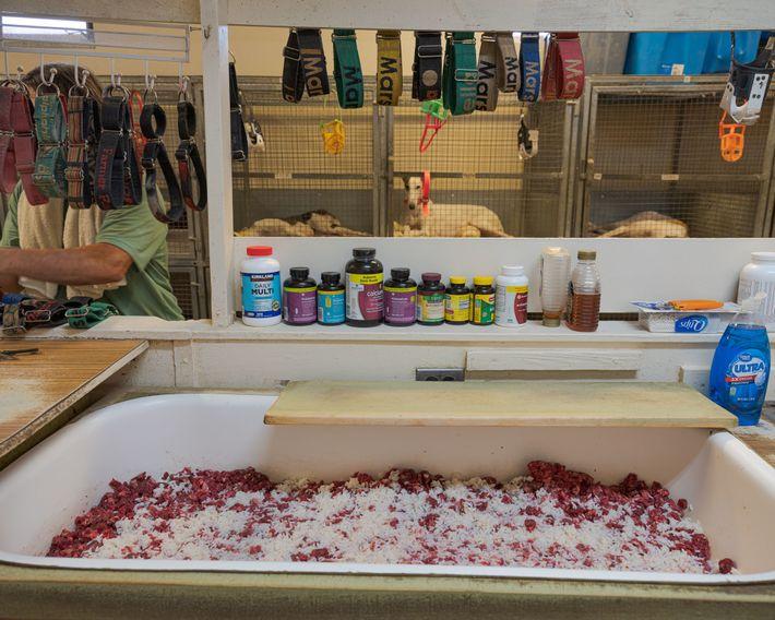 Hundehalsbänder hängen über einer mit rohem Rindfleisch und Reis gefüllten Wanne, während der Zwingerbesitzer und Ausbilder ...