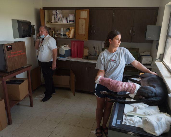 Der Rennstrecken-Tierarzt Donald Beck und die Trainerin Kelsie Gubbels kümmern sich um BD Wells, der eine ...