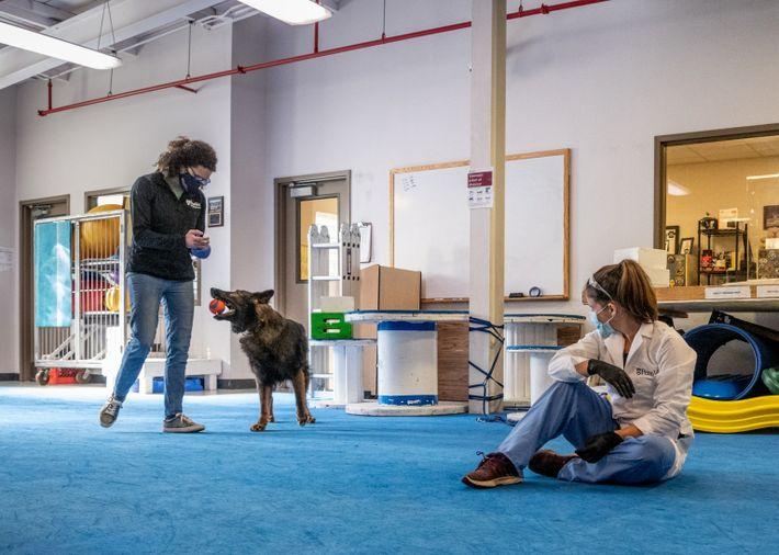 Schäferhund soll Coronavirus erschnüffeln