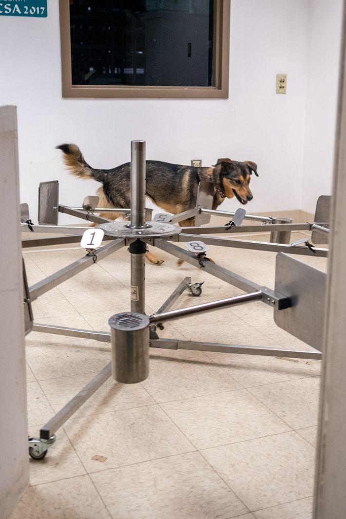 Hund spürt das Coronavirus auf