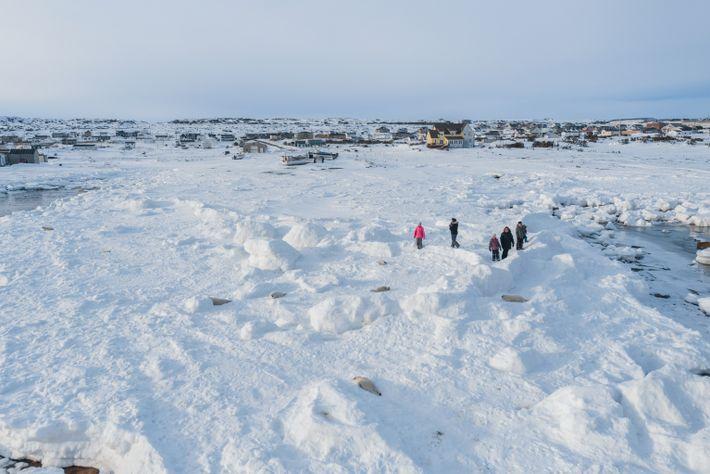 Îles de la Madeleine Robben
