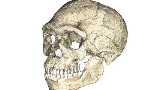 Galerie: Diese frühen Menschen lebten vor 300.000 Jahren – hatten aber moderne Gesichter