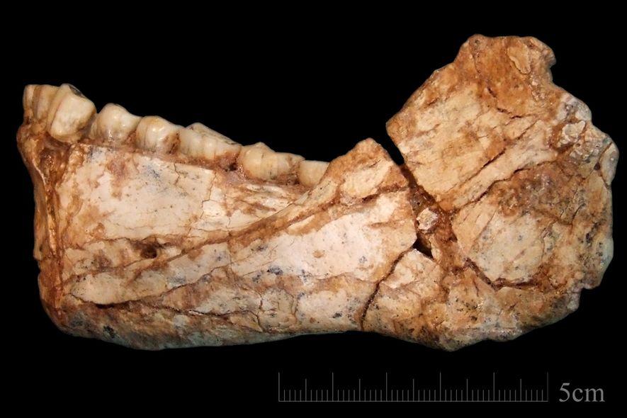 Diese frühen Menschen lebten vor 300.000 Jahren – hatten aber moderne Gesichter