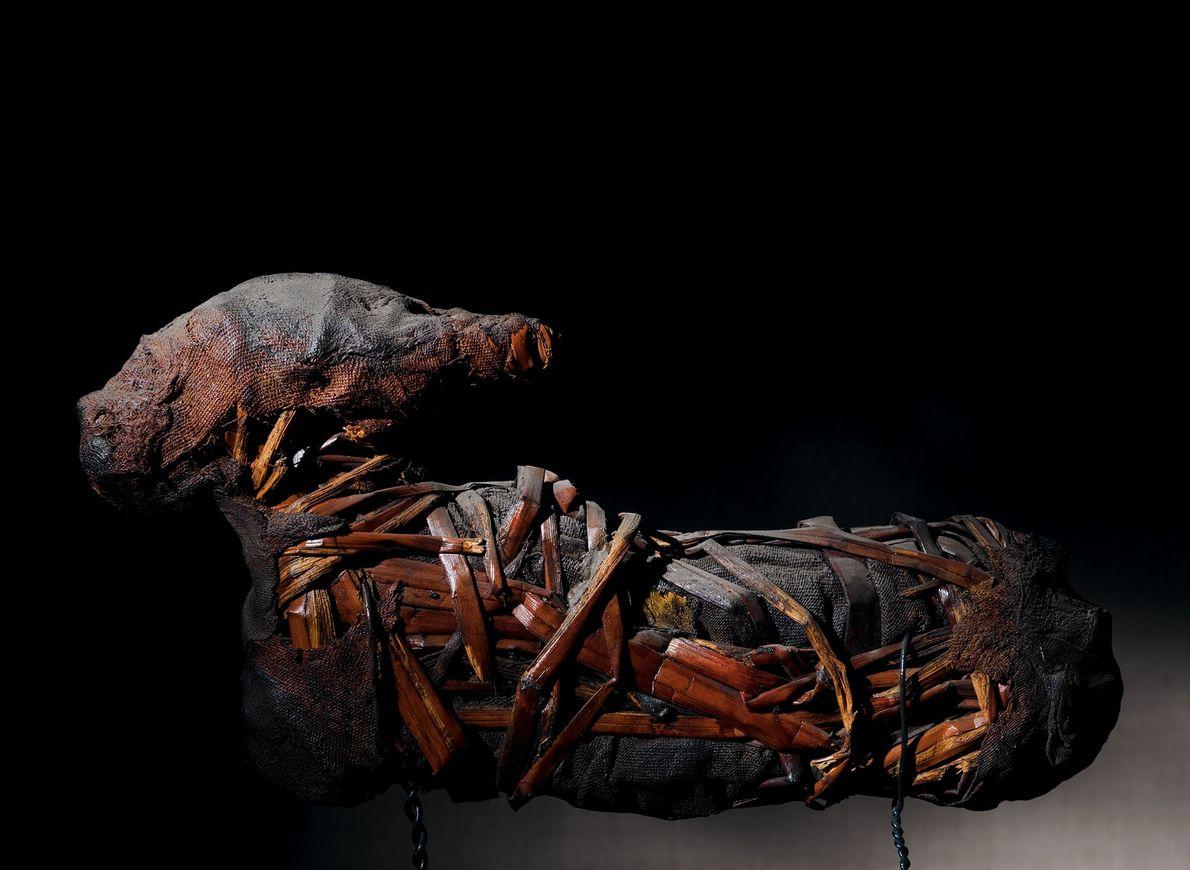Mumie einer Gazelle