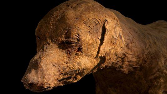 Galerie: Die Tiermumien-Industrie des Alten Ägypten