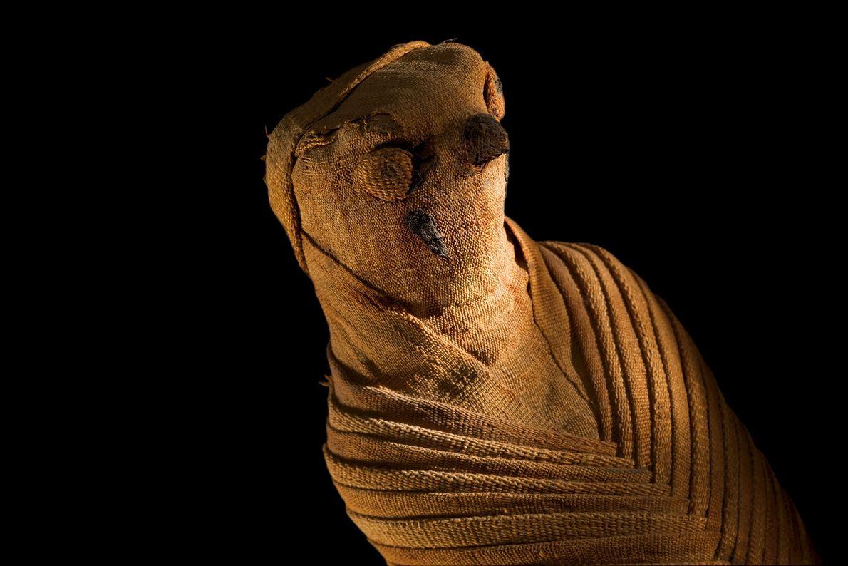 Mumie eines Greifvogels
