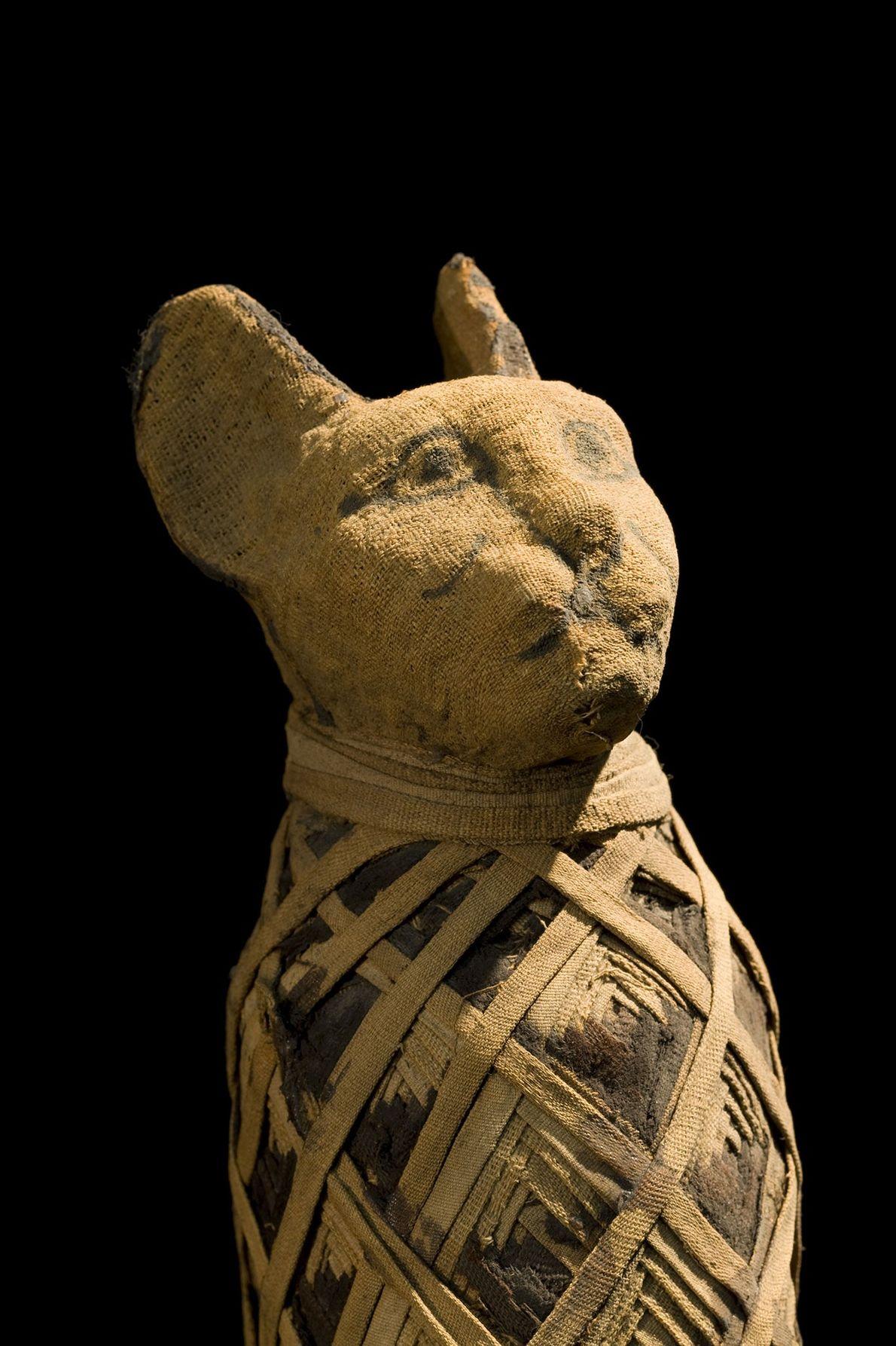Mumie einer Katze