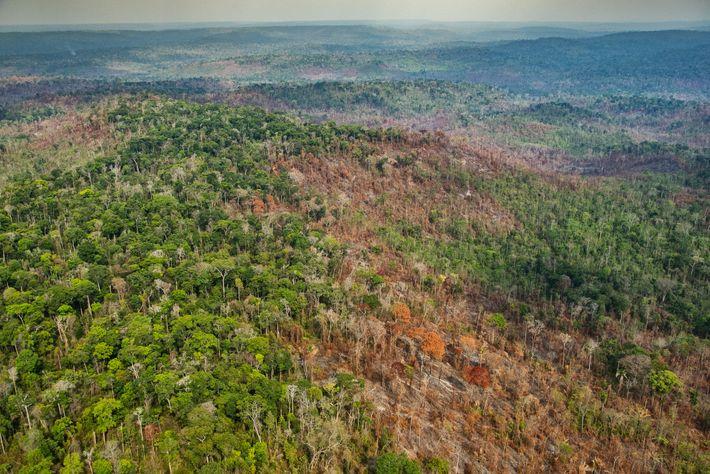 Brandschäden im Kerngebiet des Arariboia Indigenous Territory, in dem schätzungsweise 60 bis 80 Awá-Nomaden leben. Ihr ...