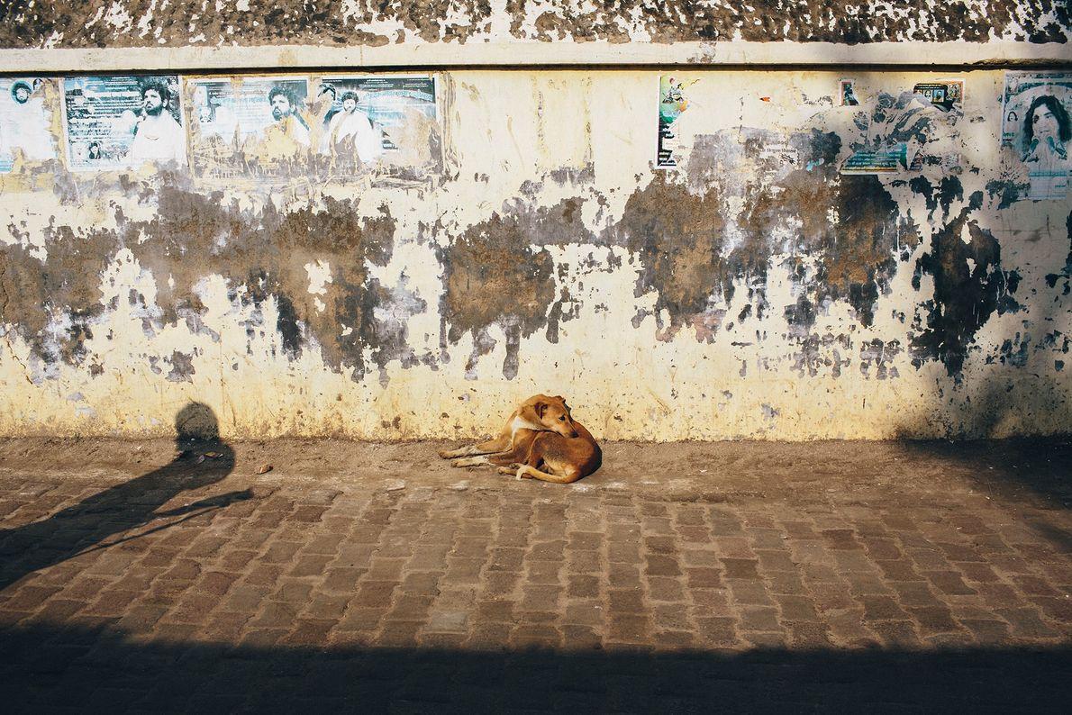 Ein Straßenhund in Uttar Pradesh wärmt sich in der Wintersonne.