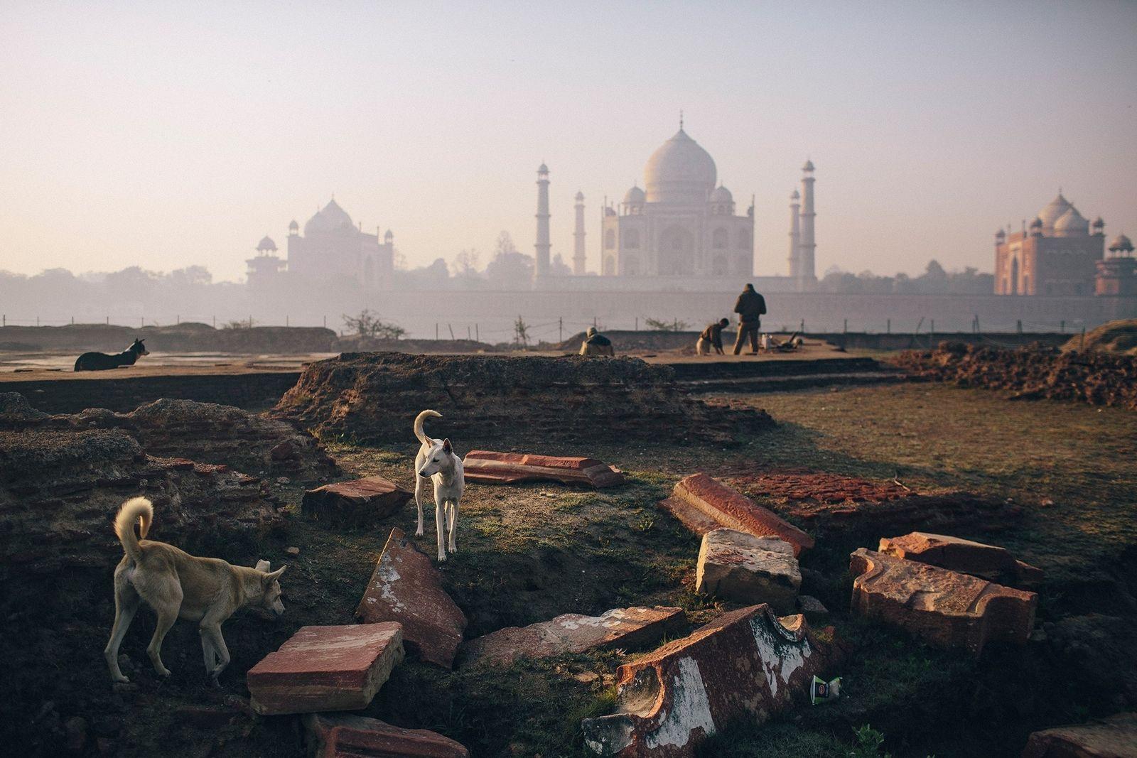 In Indien gibt es mehr als 35 Millionen streunende Hunde, darunter auch diese Tiere beim Taj ...