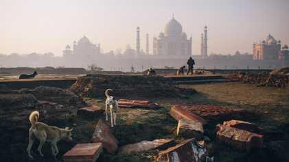 Eine neue Generation adoptiert Indiens Straßenhunde