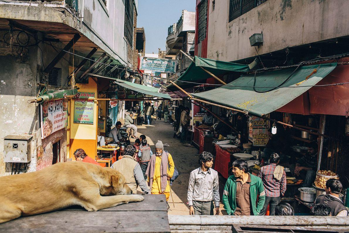 Ein Hund beobachtet vorbeiziehende Menschen bei einem Tempel in Uttar Pradesh, dem bevölkerungsreichsten Bundesstaat Indiens.