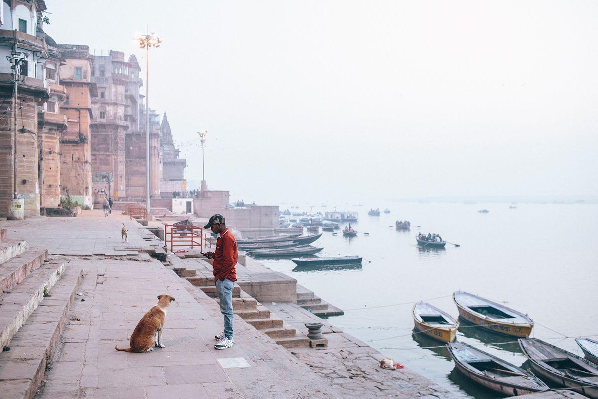 Ein Streuner sitzt am Hafen von Varanasi in Uttar Pradesh. Einer aktuellen Studie zufolge können streunende ...