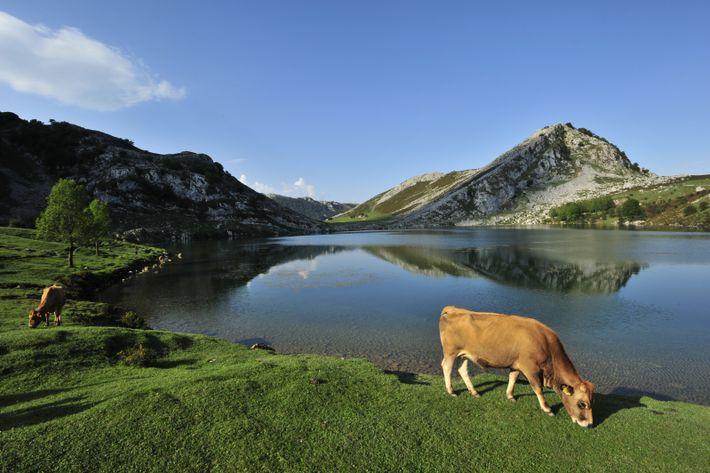 Der Nationalpark Picos de Europa erstreckt sich über dramatische Landschaften mit ruhigen Seen und Kalksteinhöhlen sowie ...
