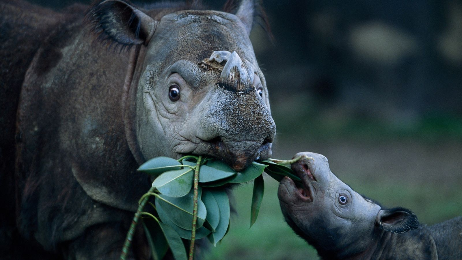 Müttermomente aus dem Tierreich